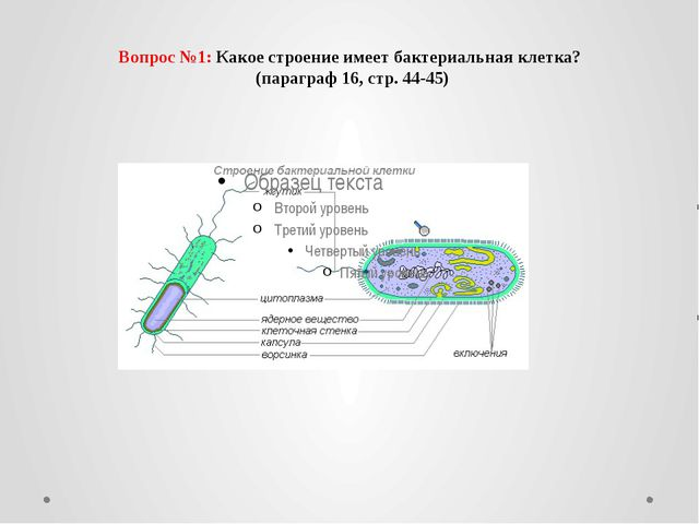 Вопрос №1: Какое строение имеет бактериальная клетка? (параграф 16, стр. 44-...