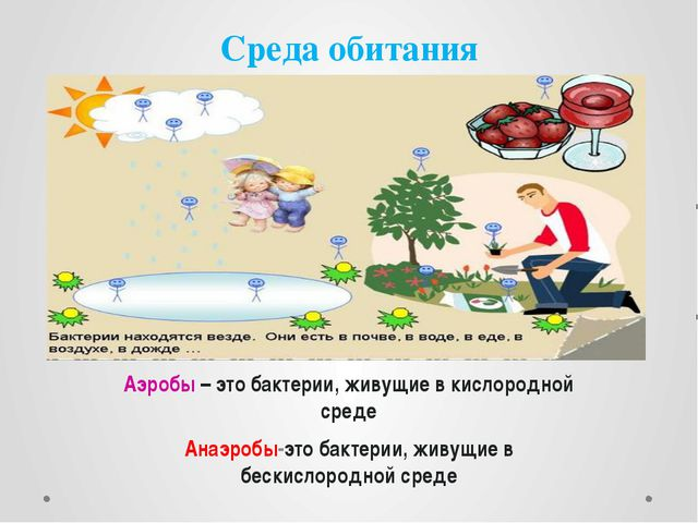 Среда обитания Бактерии обитают всюду Аэробы – это бактерии, живущие в кислор...
