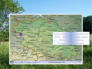 Сбор материала проводился в 2014 – 2015гг. на территории Шпаковского района С