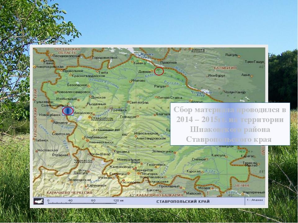 Сбор материала проводился в 2014 – 2015гг. на территории Шпаковского района С...