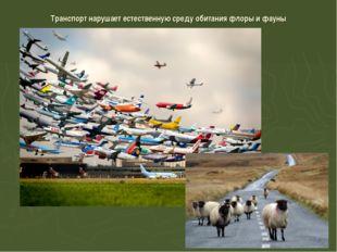 Транспорт нарушает естественную среду обитания флоры и фауны