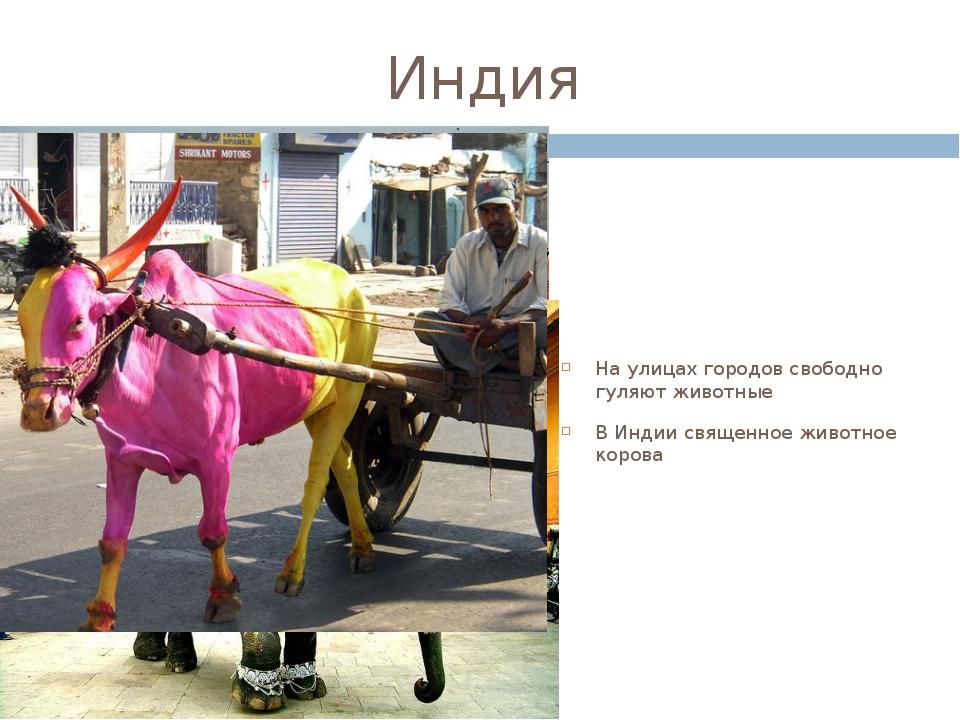 Индия На улицах городов свободно гуляют животные В Индии священное животное к...