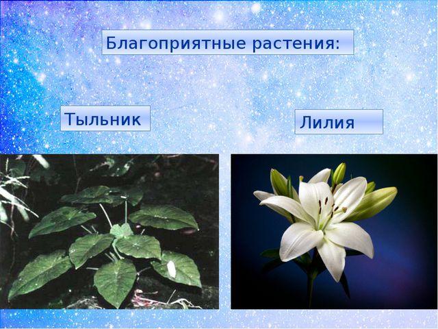 Благоприятные растения: Тыльник Лилия