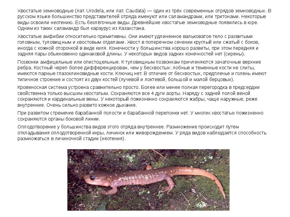 Хвостатые земноводные (лат. Urodela, или лат. Caudata) — один из трёх совреме...