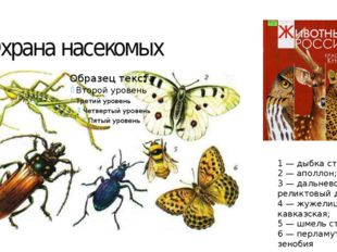 Охрана насекомых 1 — дыбка степная; 2 — аполлон; 3 — дальневосточный реликтов