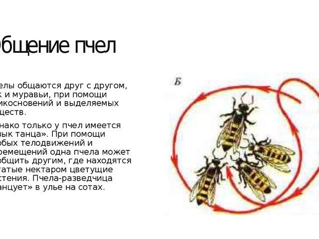 Общение пчел Пчелы общаются друг с другом, как и муравьи, при помощи прикосно...