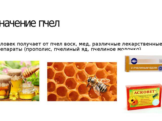 Значение пчел Человек получает от пчел воск, мед, различные лекарственные пре...