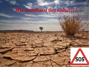 Мы погибаем без воды!!!!