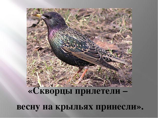 «Скворцы прилетели – весну на крыльях принесли».
