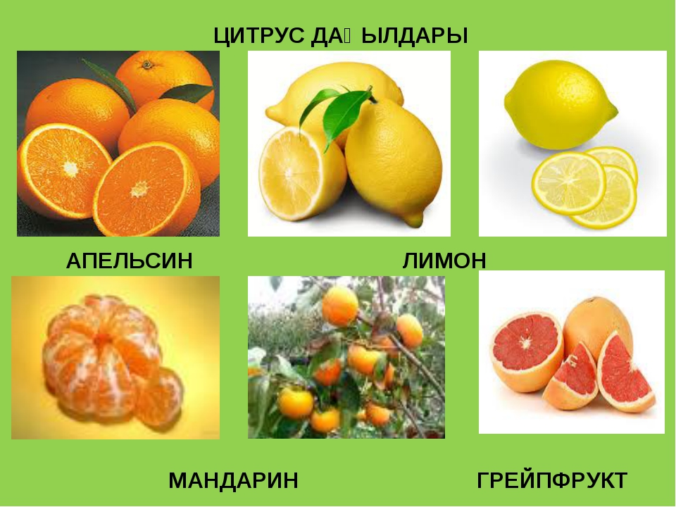 ЦИТРУС ДАҚЫЛДАРЫ АПЕЛЬСИН ЛИМОН МАНДАРИН ГРЕЙПФРУКТ