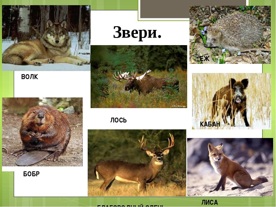 Годовщиной, картинки с изображением зайца лисы белки волка медведя бурундука ежа