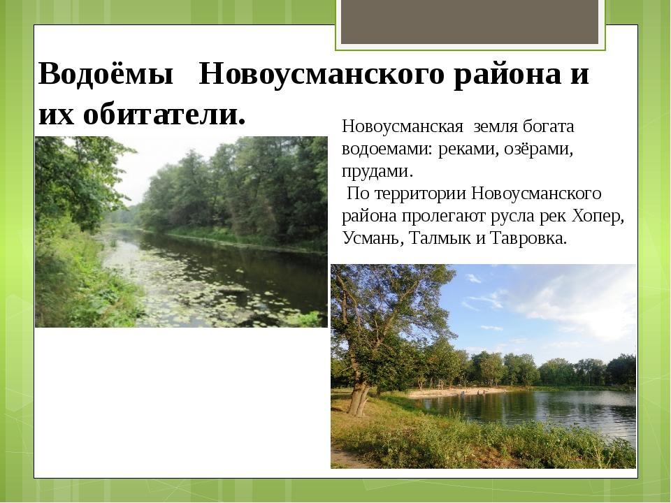 Водоёмы Новоусманского района и их обитатели. Новоусманская земля богата водо...