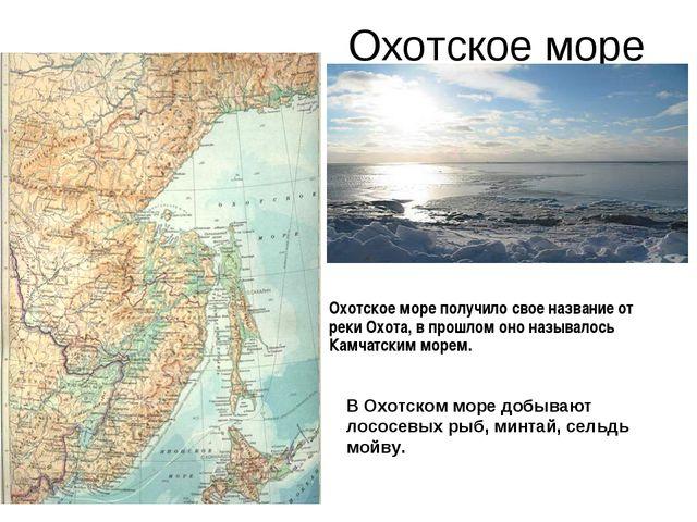 Охотское море В Охотском море добывают лососевых рыб, минтай, сельдь мойву. О...