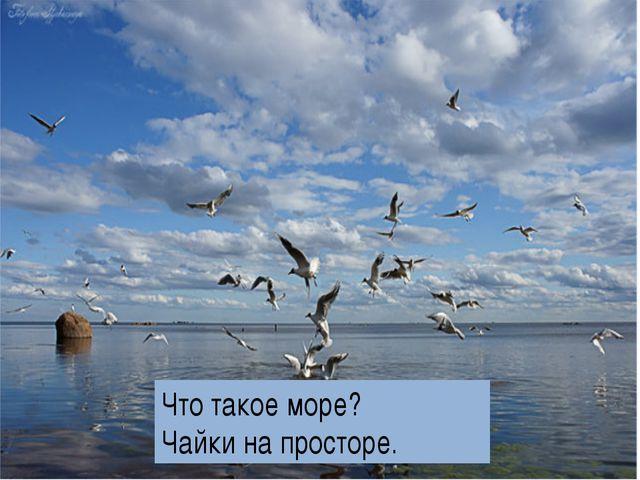Что такое море? Чайки на просторе.