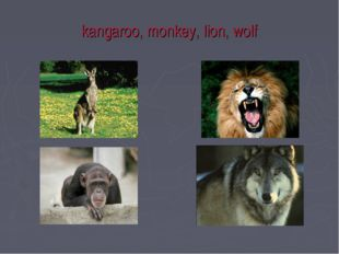 kangaroo, monkey, lion, wolf