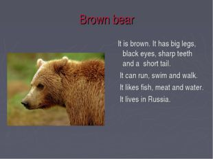 Brown bear It is brown. It has big legs, black eyes, sharp teeth and a short