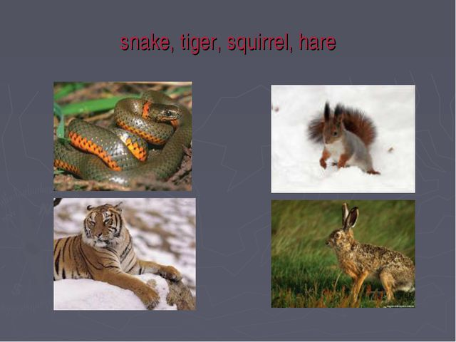 snake, tiger, squirrel, hare