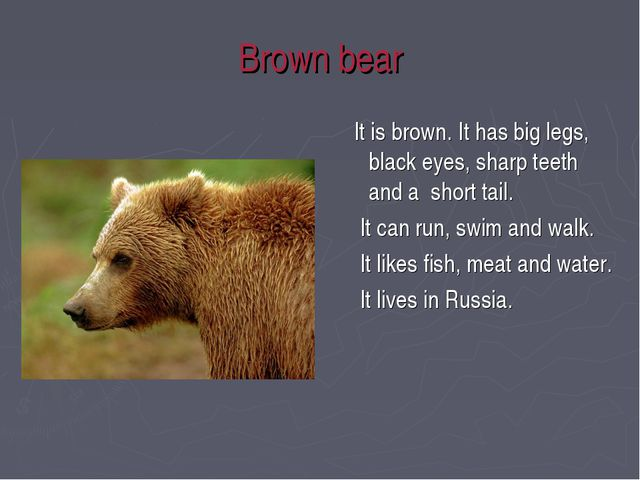 Brown bear It is brown. It has big legs, black eyes, sharp teeth and a short...