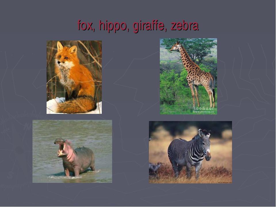 fox, hippo, giraffe, zebra