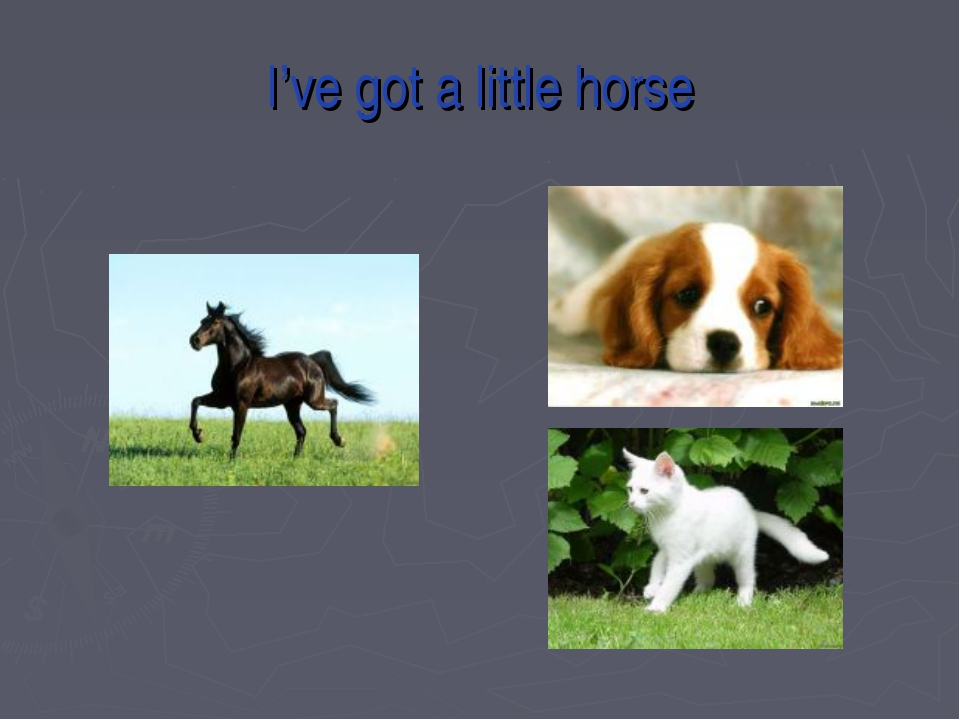 I've got a little horse