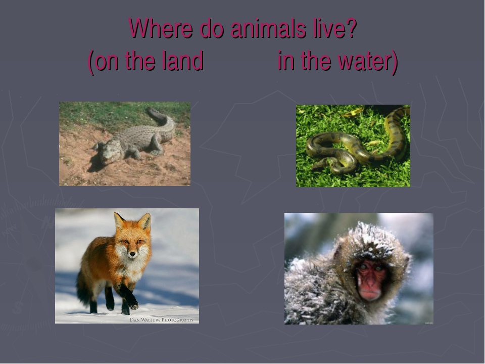 Where do animals live? (on the land in the water)