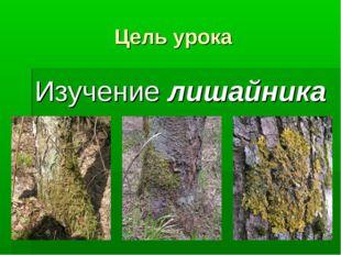 Цель урока Изучение лишайника