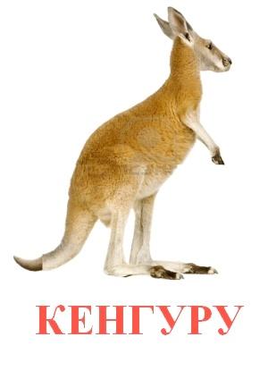 C:\Users\Андрей\Desktop\картинки к уроку\дикие животные\кенгуру.jpg