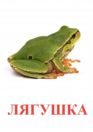 C:\Users\Андрей\Desktop\картинки к уроку\дикие животные\лягушка.jpg