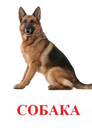 C:\Users\Андрей\Desktop\картинки к уроку\домашние животные\собака.jpg