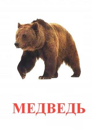 C:\Users\Андрей\Desktop\картинки к уроку\дикие животные\медведь.jpg