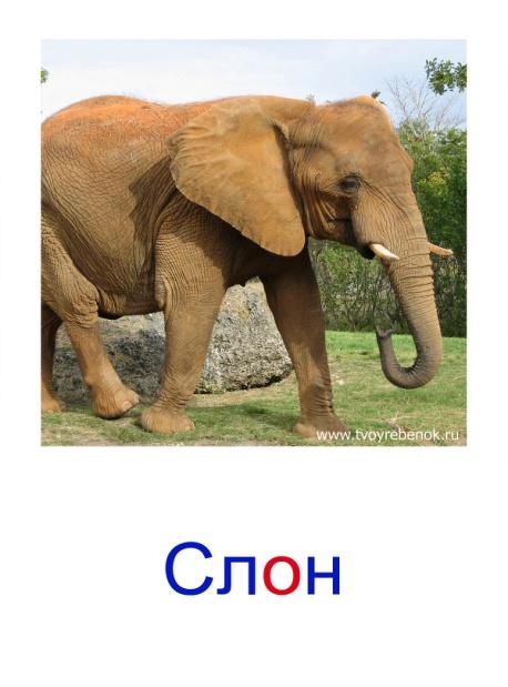 C:\Users\Андрей\Desktop\картинки к уроку\дикие животные\025.jpg