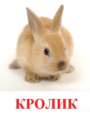 C:\Users\Андрей\Desktop\картинки к уроку\домашние животные\кролик.jpg