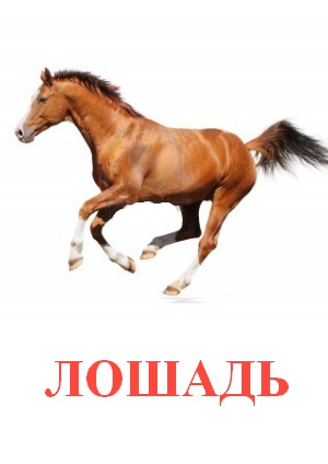 C:\Users\Андрей\Desktop\картинки к уроку\домашние животные\лошадь.jpg