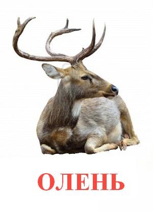 C:\Users\Андрей\Desktop\картинки к уроку\дикие животные\олень.jpg