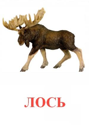 C:\Users\Андрей\Desktop\картинки к уроку\дикие животные\лось.jpg