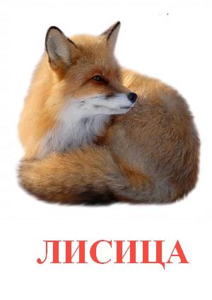 C:\Users\Андрей\Desktop\картинки к уроку\дикие животные\лисица.jpg