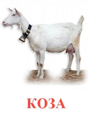 C:\Users\Андрей\Desktop\картинки к уроку\домашние животные\коза.jpg