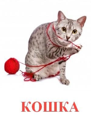 C:\Users\Андрей\Desktop\картинки к уроку\домашние животные\кошка.jpg