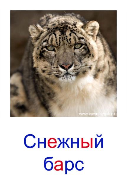 C:\Users\Андрей\Desktop\картинки к уроку\дикие животные\011.jpg