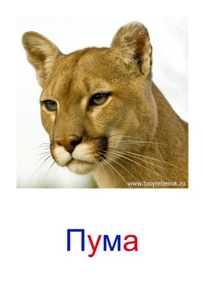 C:\Users\Андрей\Desktop\картинки к уроку\дикие животные\027.jpg