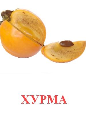 C:\Users\Андрей\Desktop\картинки к уроку\фрукты\хурма.jpg