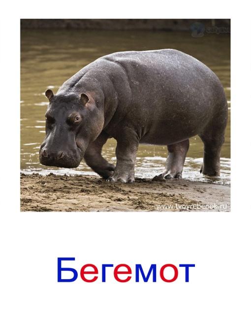 C:\Users\Андрей\Desktop\картинки к уроку\дикие животные\028.jpg