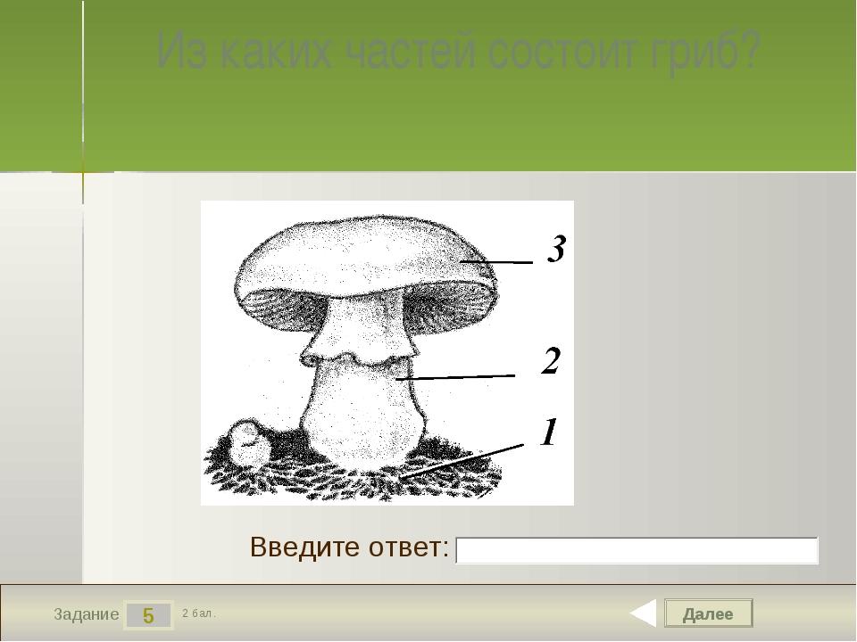 Далее 5 Задание 2 бал. Введите ответ: Из каких частей состоит гриб?