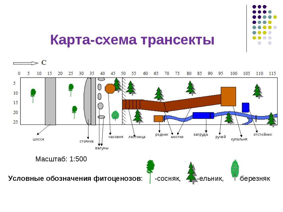 Карта-схема трансекты шоссе стоянка валуны часовня мостки родник запруда лест...
