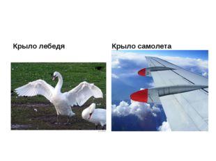 Крыло лебедя Крыло самолета