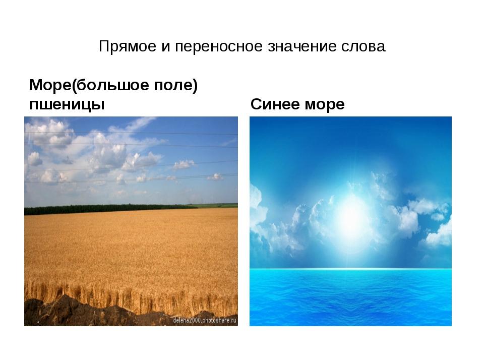 Прямое и переносное значение слова Море(большое поле) пшеницы Синее море