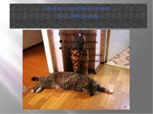 Мой кот прибавил в весе 1 кг. 100 грамм.