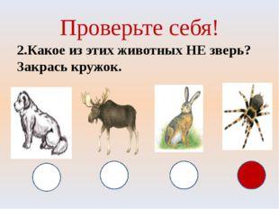 Проверьте себя! 2.Какое из этих животных НЕ зверь? Закрась кружок.