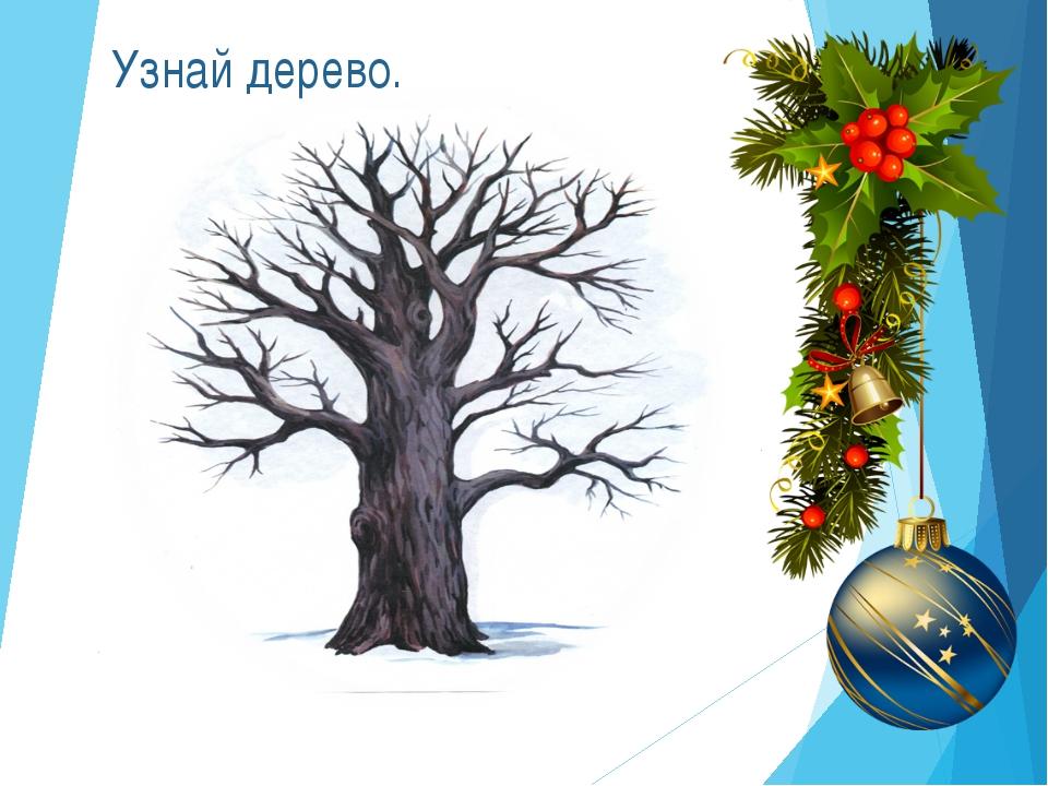 Узнай дерево.