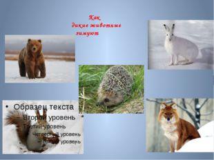 Как дикие животные зимуют
